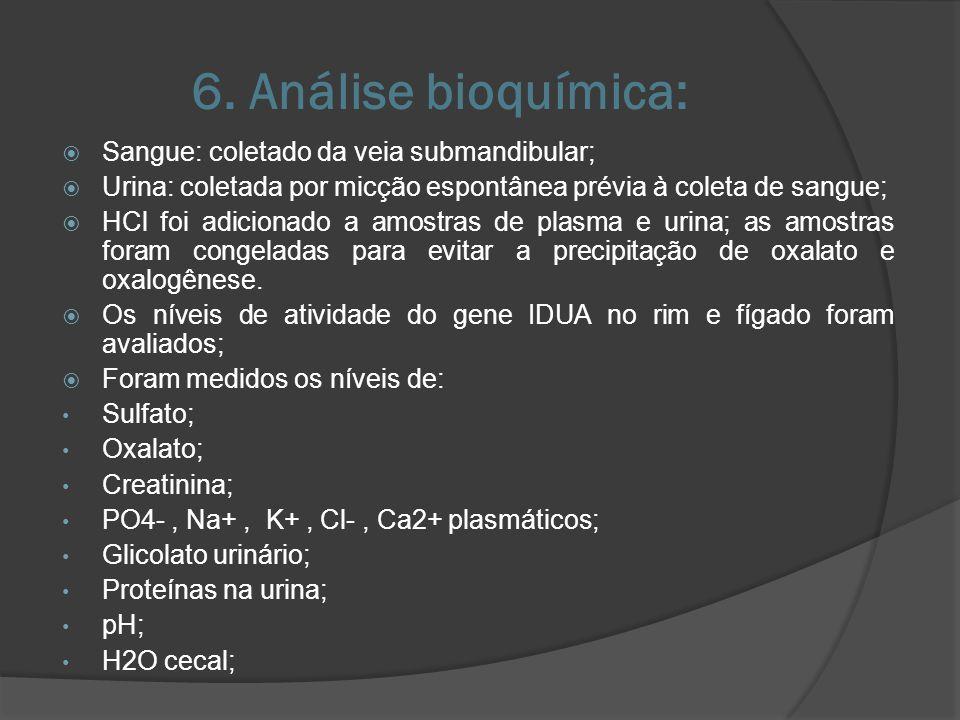 6. Análise bioquímica: Sangue: coletado da veia submandibular;