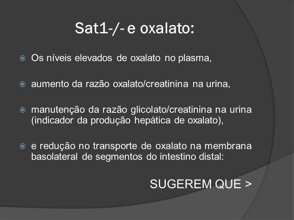 Sat1-/- e oxalato: SUGEREM QUE >