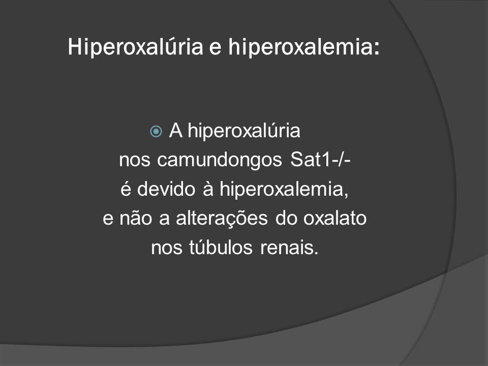Hiperoxalúria e hiperoxalemia: