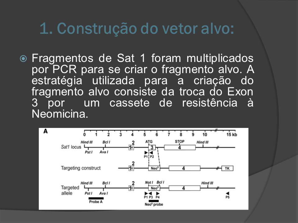 1. Construção do vetor alvo: