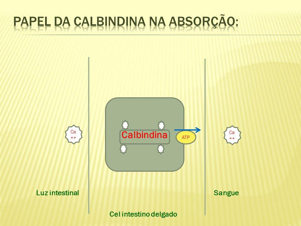 Papel da calbindina na absorção: