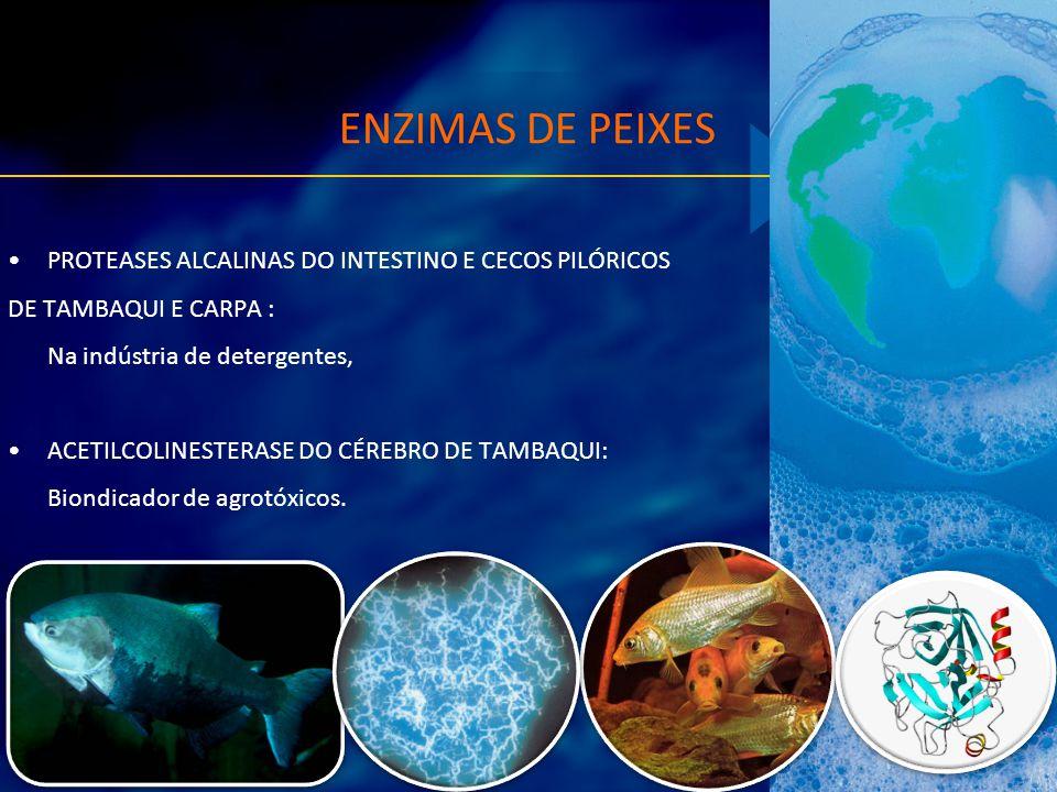 ENZIMAS DE PEIXES PROTEASES ALCALINAS DO INTESTINO E CECOS PILÓRICOS