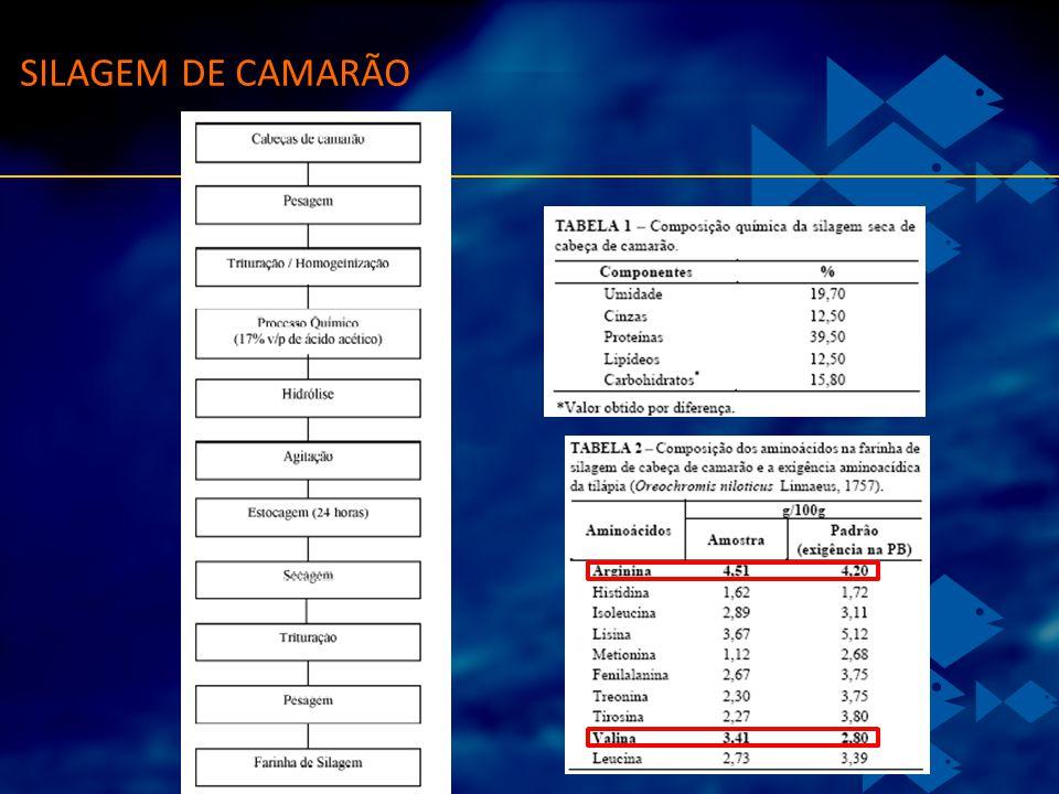 SILAGEM DE CAMARÃO