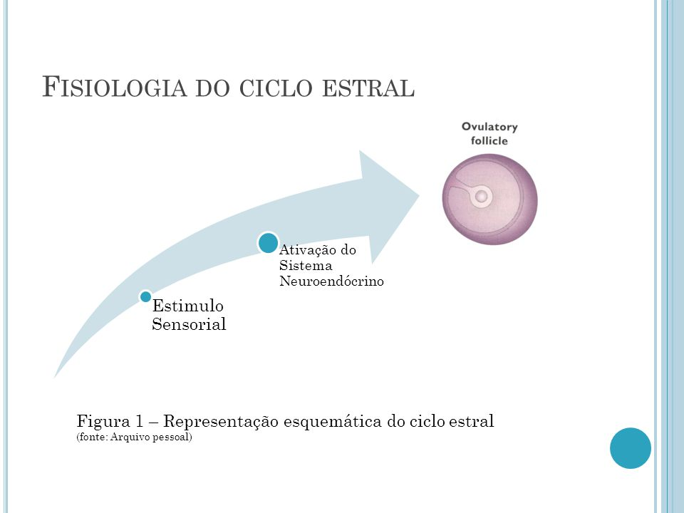 Fisiologia do ciclo estral