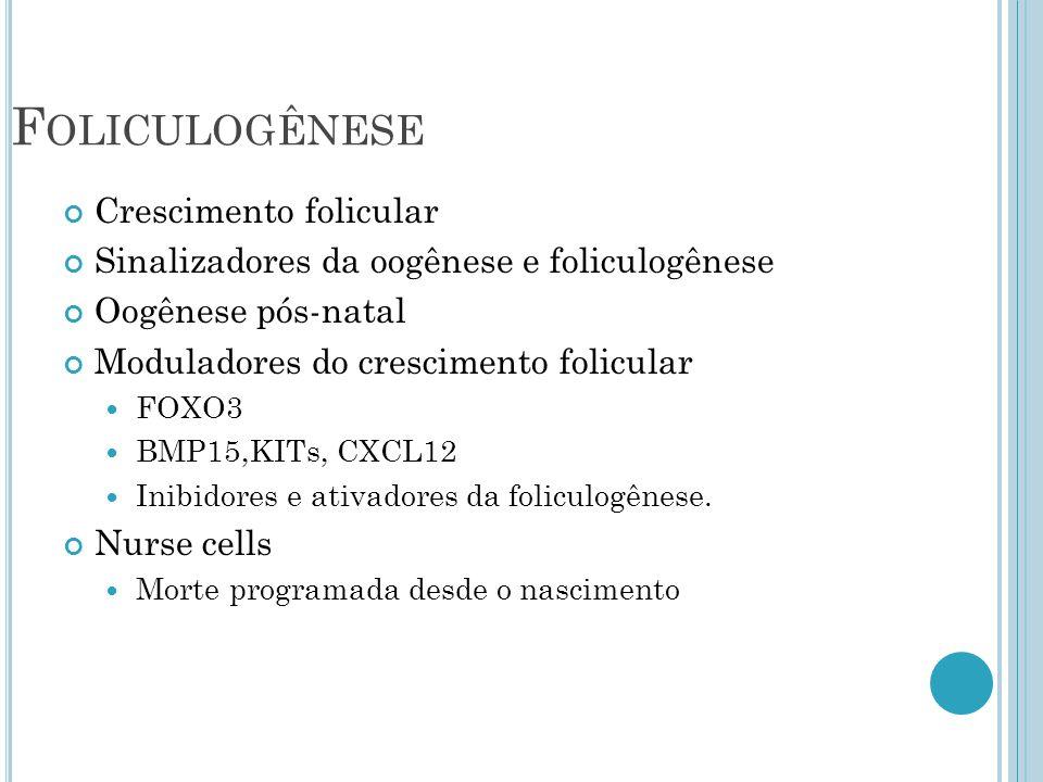 Foliculogênese Crescimento folicular