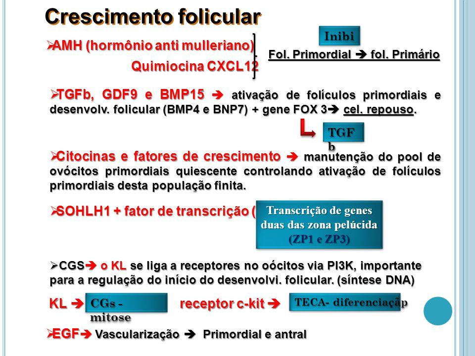 Transcrição de genes duas das zona pelúcida (ZP1 e ZP3)
