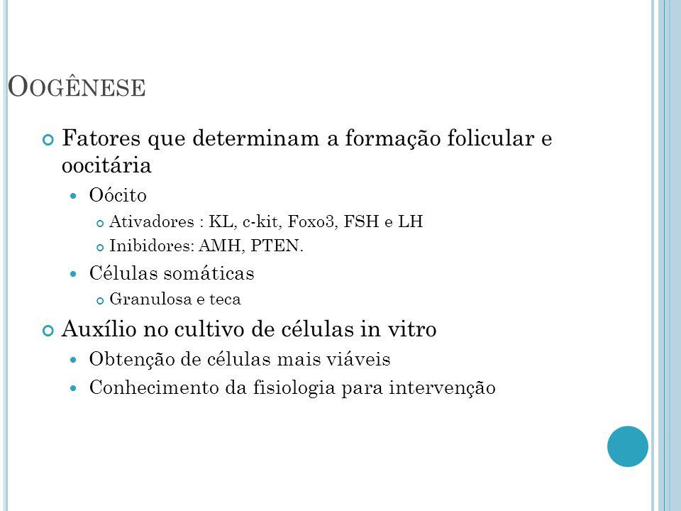 Oogênese Fatores que determinam a formação folicular e oocitária