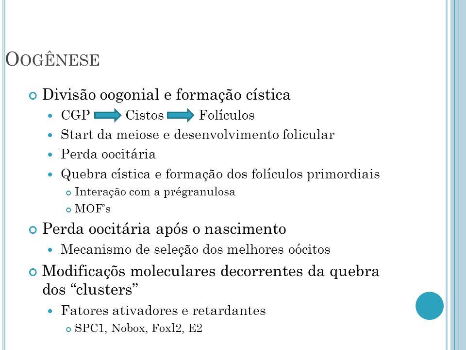Oogênese Divisão oogonial e formação cística
