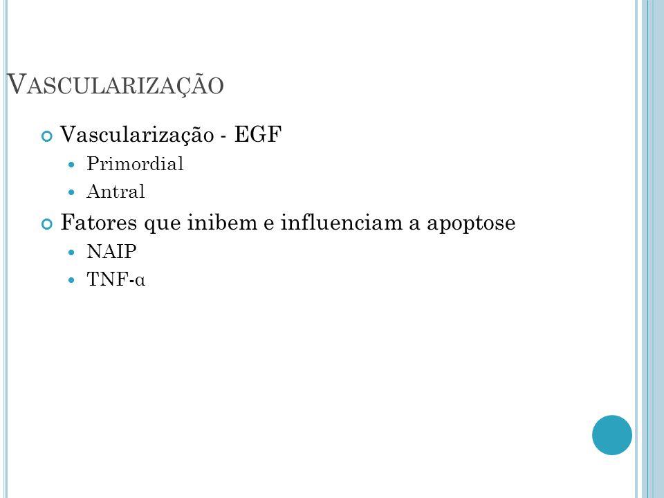 Vascularização Vascularização - EGF