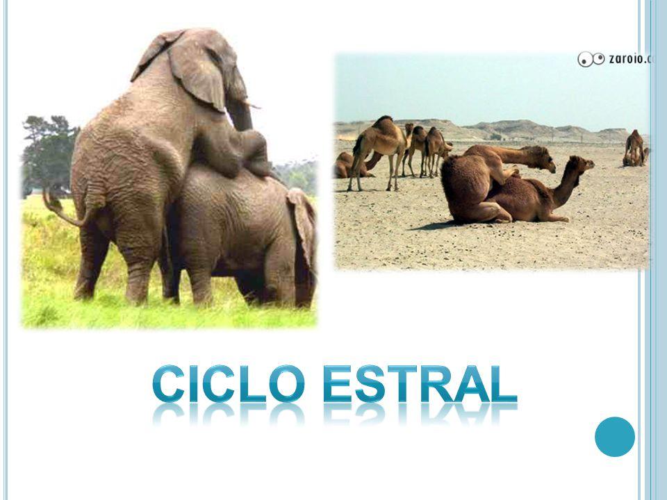 Ciclo ESTRAL