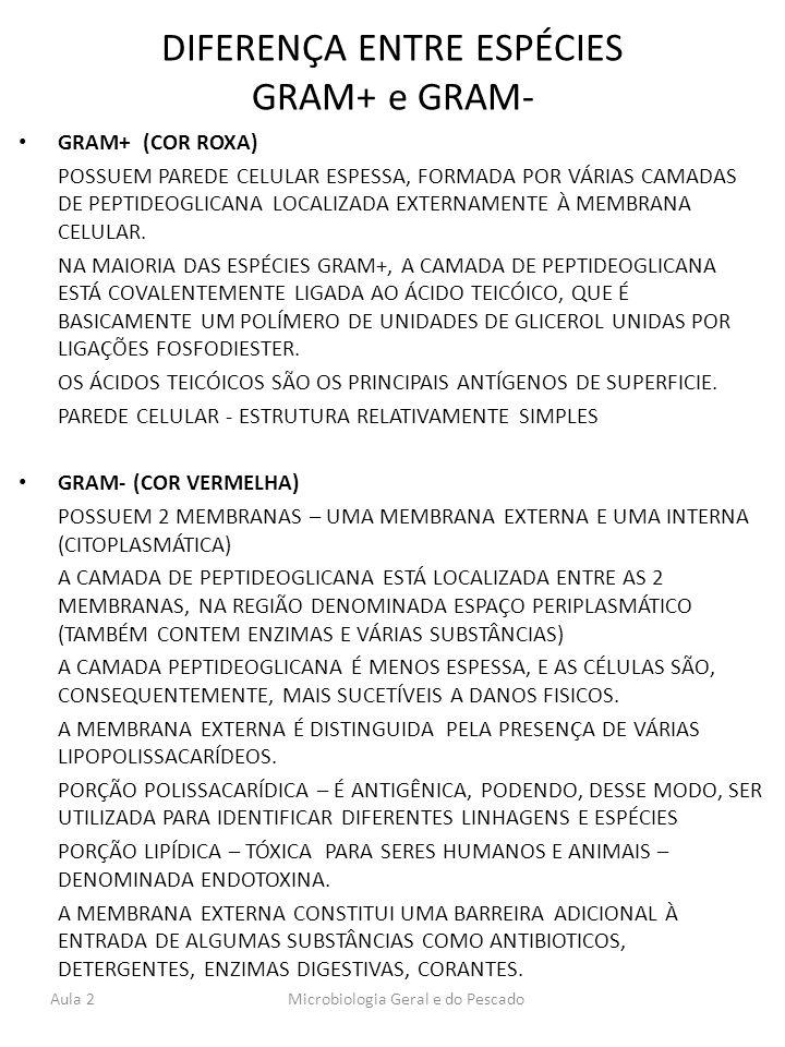 DIFERENÇA ENTRE ESPÉCIES GRAM+ e GRAM-