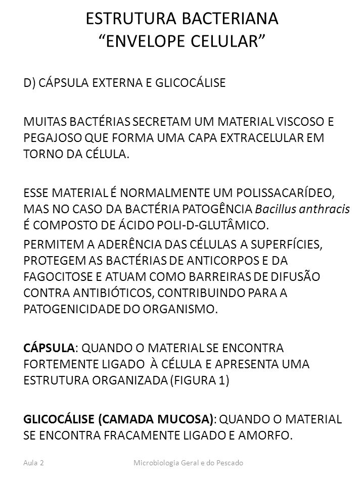 ESTRUTURA BACTERIANA ENVELOPE CELULAR
