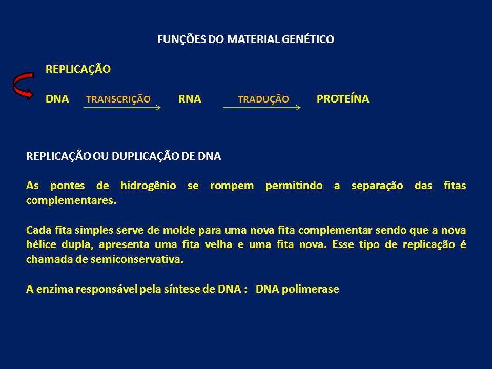 FUNÇÕES DO MATERIAL GENÉTICO