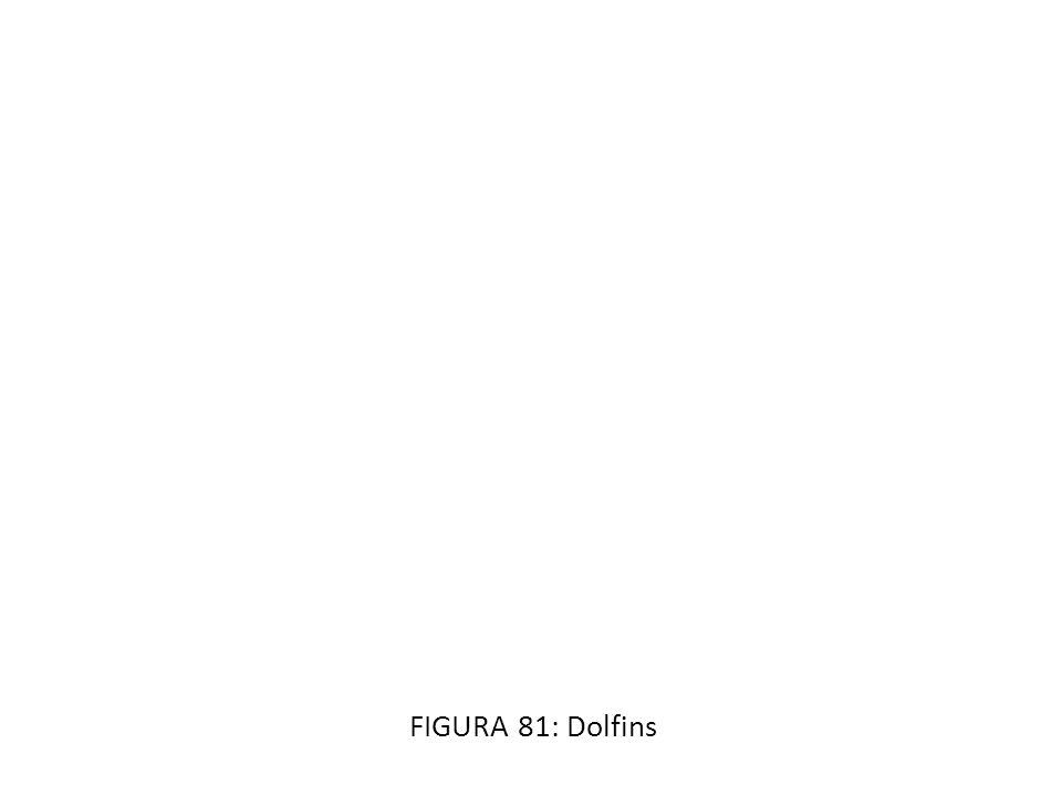 FIGURA 81: Dolfins