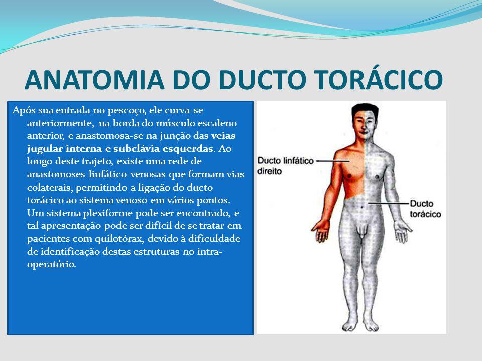 ANATOMIA DO DUCTO TORÁCICO