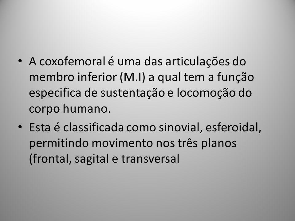 A coxofemoral é uma das articulações do membro inferior (M