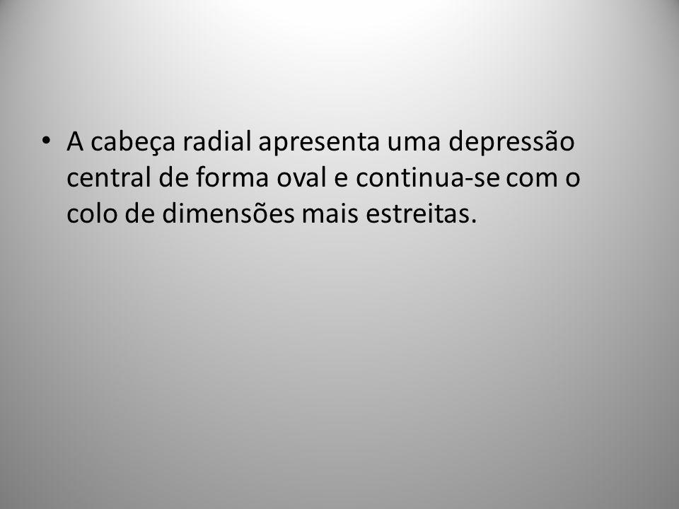 A cabeça radial apresenta uma depressão central de forma oval e continua-se com o colo de dimensões mais estreitas.