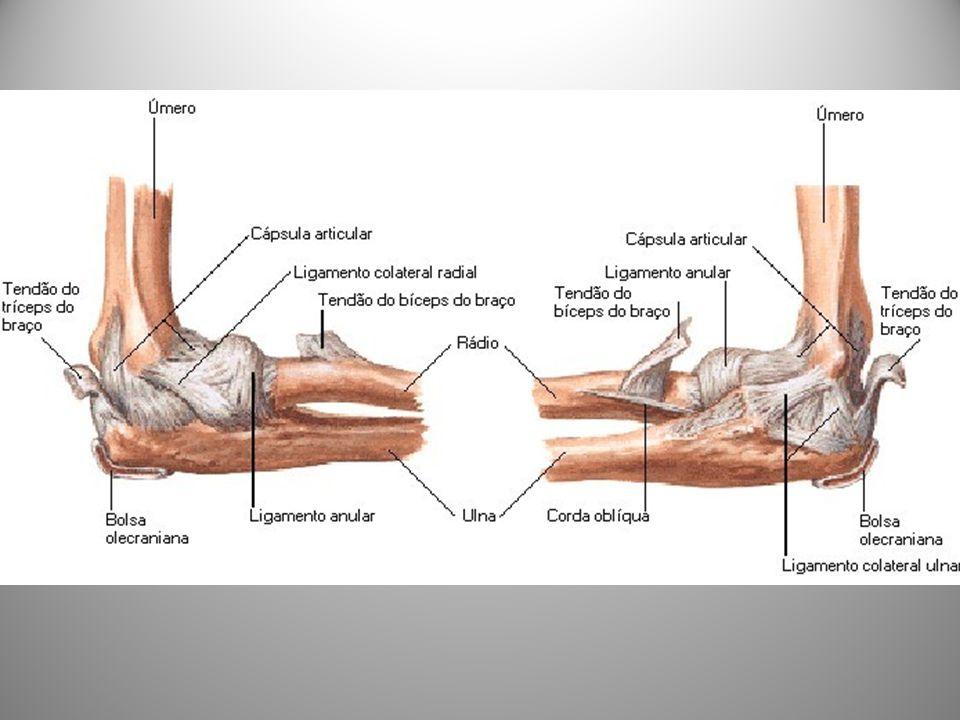 Fonte: NETTER, Frank H. Atlas de Anatomia Humana. 2ed