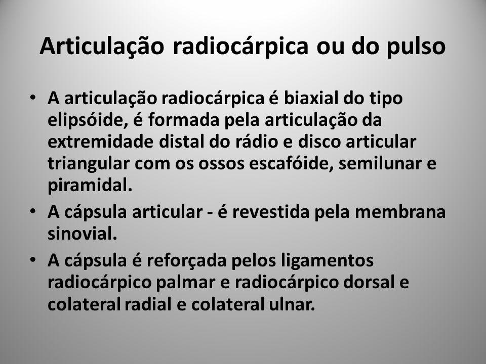 Articulação radiocárpica ou do pulso
