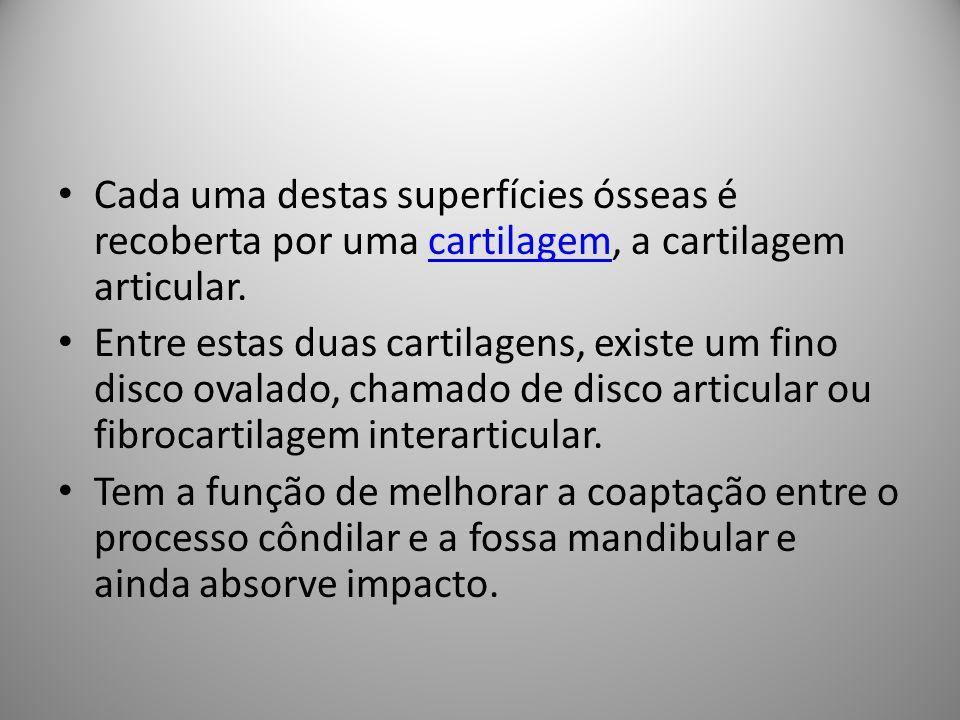 Cada uma destas superfícies ósseas é recoberta por uma cartilagem, a cartilagem articular.