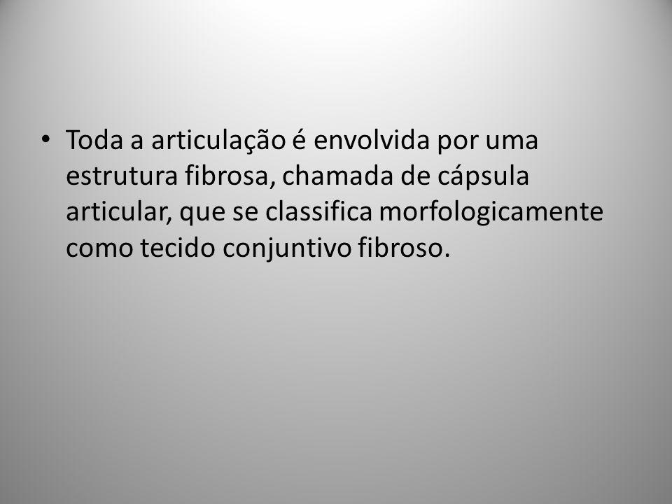 Toda a articulação é envolvida por uma estrutura fibrosa, chamada de cápsula articular, que se classifica morfologicamente como tecido conjuntivo fibroso.