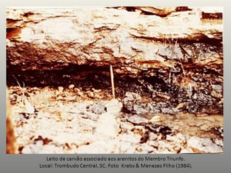 Leito de carvão associado aos arenitos do Membro Triunfo.