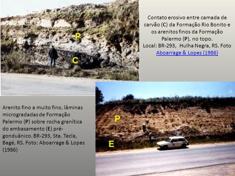 Contato erosivo entre camada de carvão (C) da Formação Rio Bonito e os arenitos finos da Formação Palermo (P), no topo. Local: BR-293, Hulha Negra, RS. Foto Aboarrage & Lopes (1986)