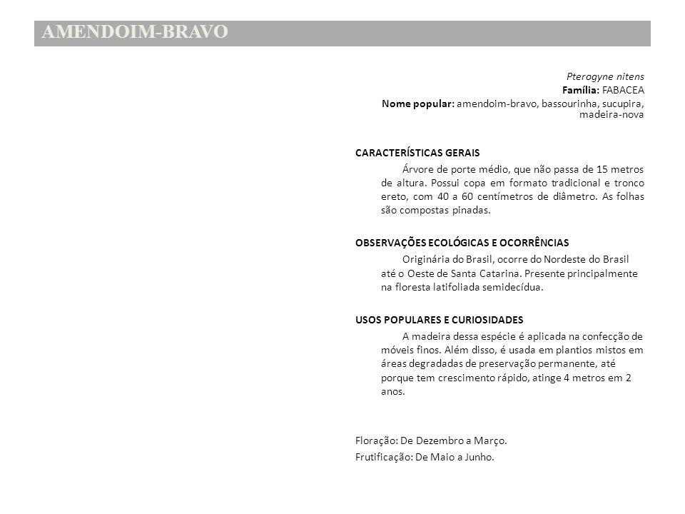 AMENDOIM-BRAVO Família: FABACEA
