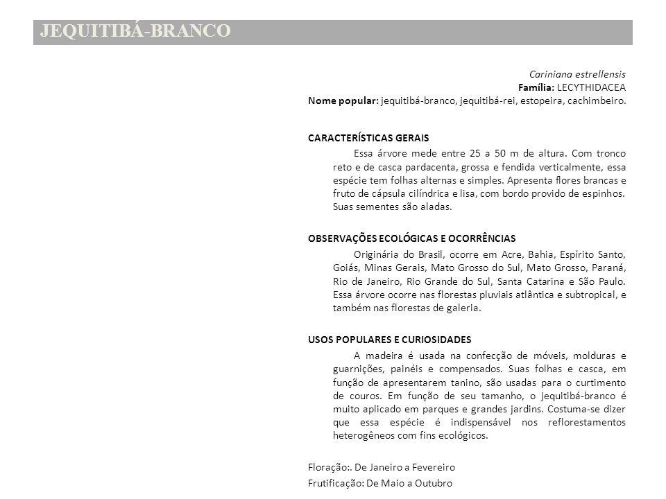 JEQUITIBÁ-BRANCO Família: LECYTHIDACEA