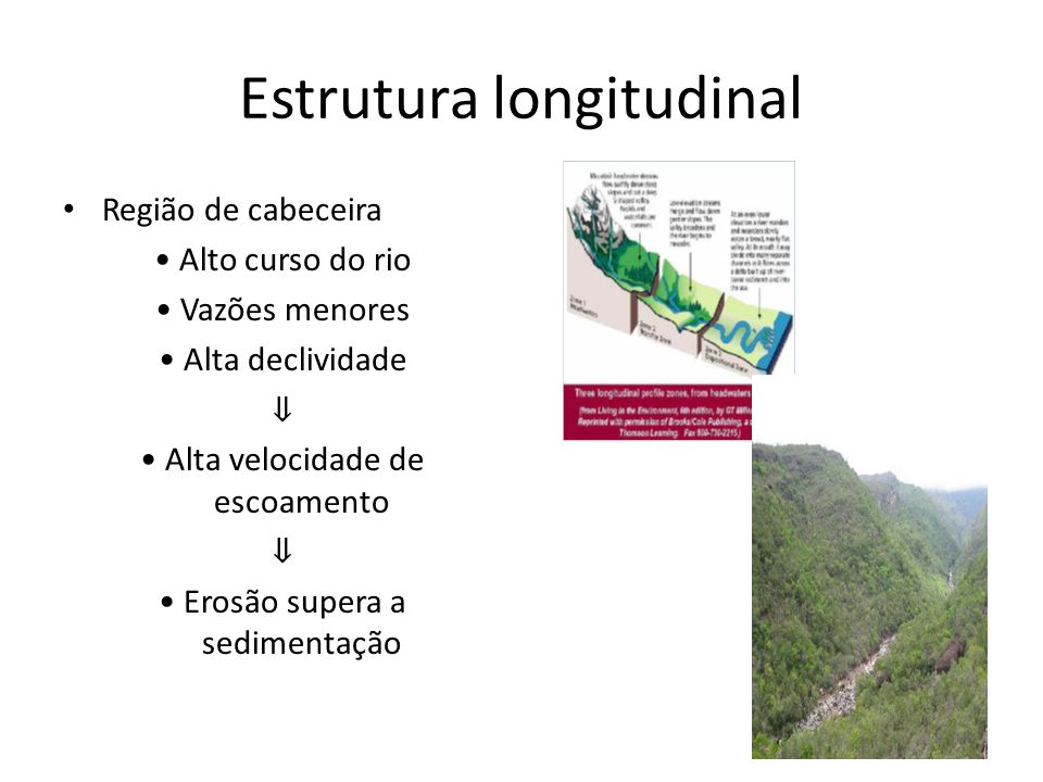 Estrutura longitudinal