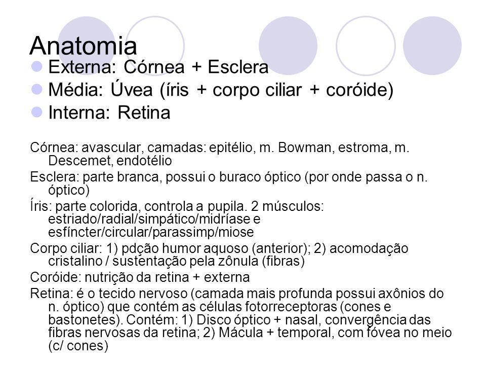 Anatomia Externa: Córnea + Esclera