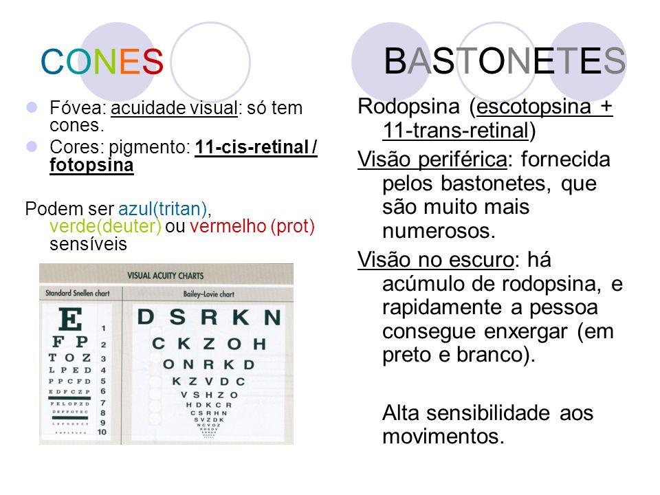 BASTONETES CONES Rodopsina (escotopsina + 11-trans-retinal)
