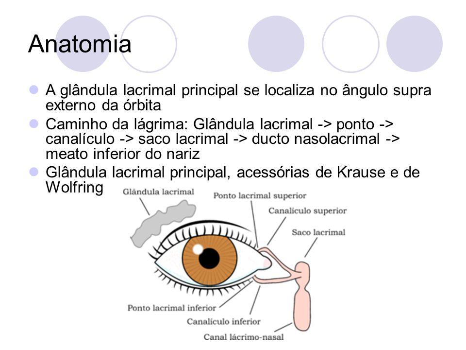 Anatomia A glândula lacrimal principal se localiza no ângulo supra externo da órbita.