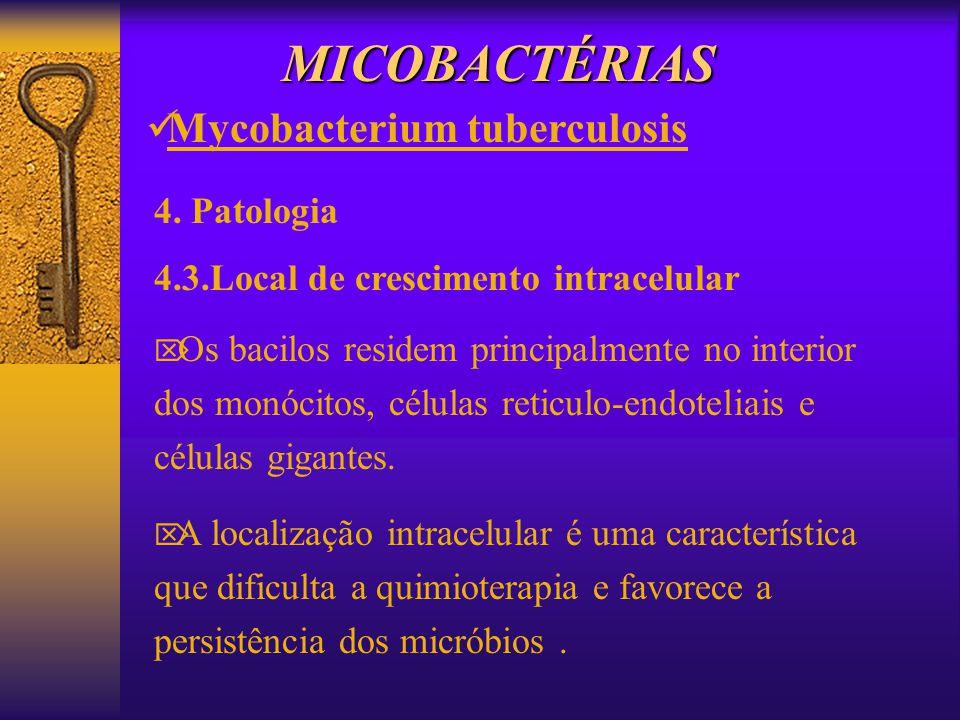 MICOBACTÉRIAS Mycobacterium tuberculosis 4. Patologia