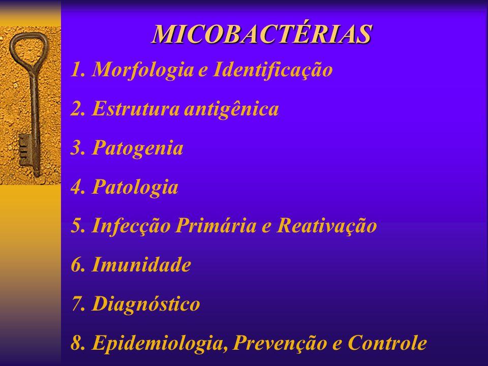 MICOBACTÉRIAS 1. Morfologia e Identificação 2. Estrutura antigênica