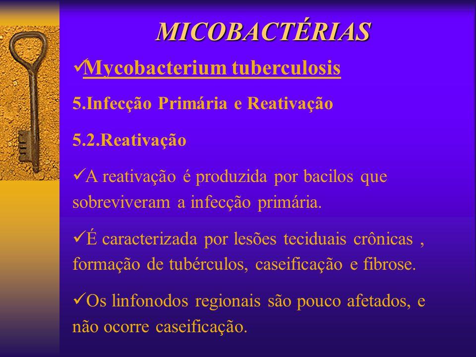 MICOBACTÉRIAS Mycobacterium tuberculosis