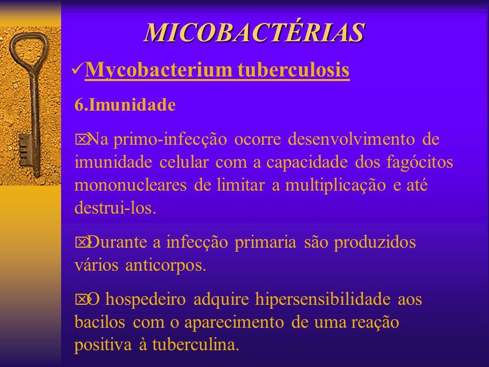 MICOBACTÉRIAS Mycobacterium tuberculosis 6.Imunidade