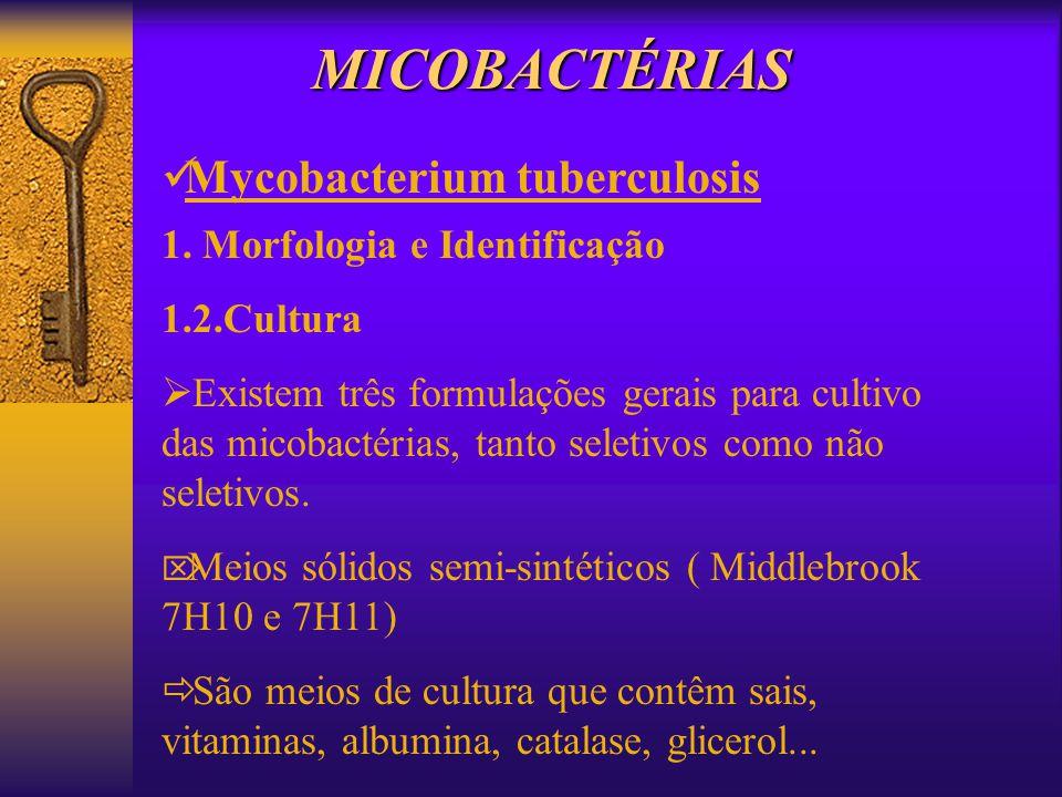 MICOBACTÉRIAS Mycobacterium tuberculosis 1. Morfologia e Identificação