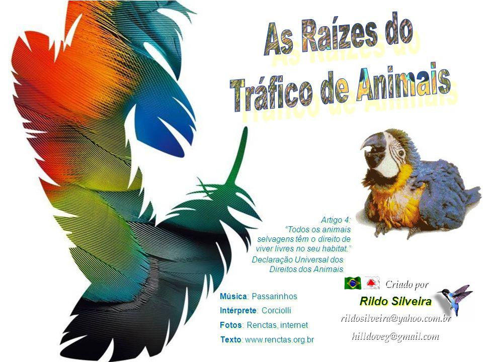 As Raízes do Tráfico de Animais Rildo Silveira Criado por