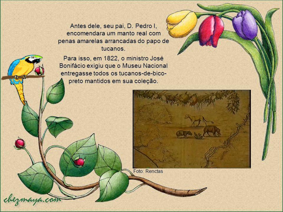 Antes dele, seu pai, D. Pedro I, encomendara um manto real com penas amarelas arrancadas do papo de tucanos.