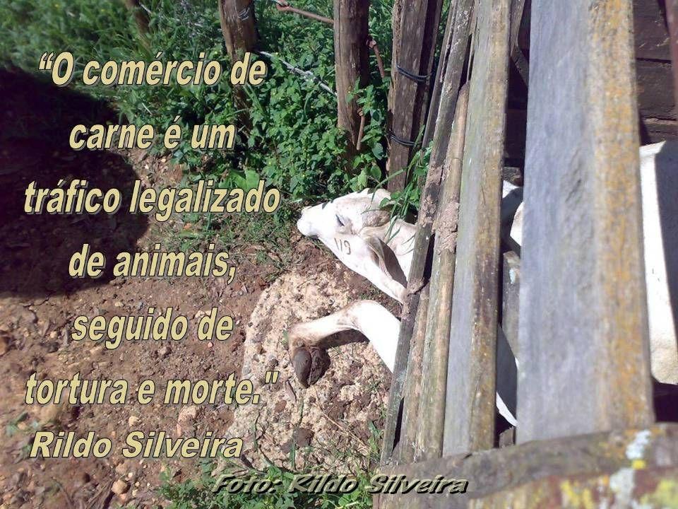 Foto: Rildo Silveira