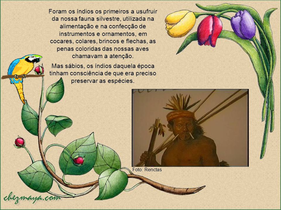 Foram os índios os primeiros a usufruir da nossa fauna silvestre, utilizada na alimentação e na confecção de instrumentos e ornamentos, em cocares, colares, brincos e flechas, as penas coloridas das nossas aves chamavam a atenção.