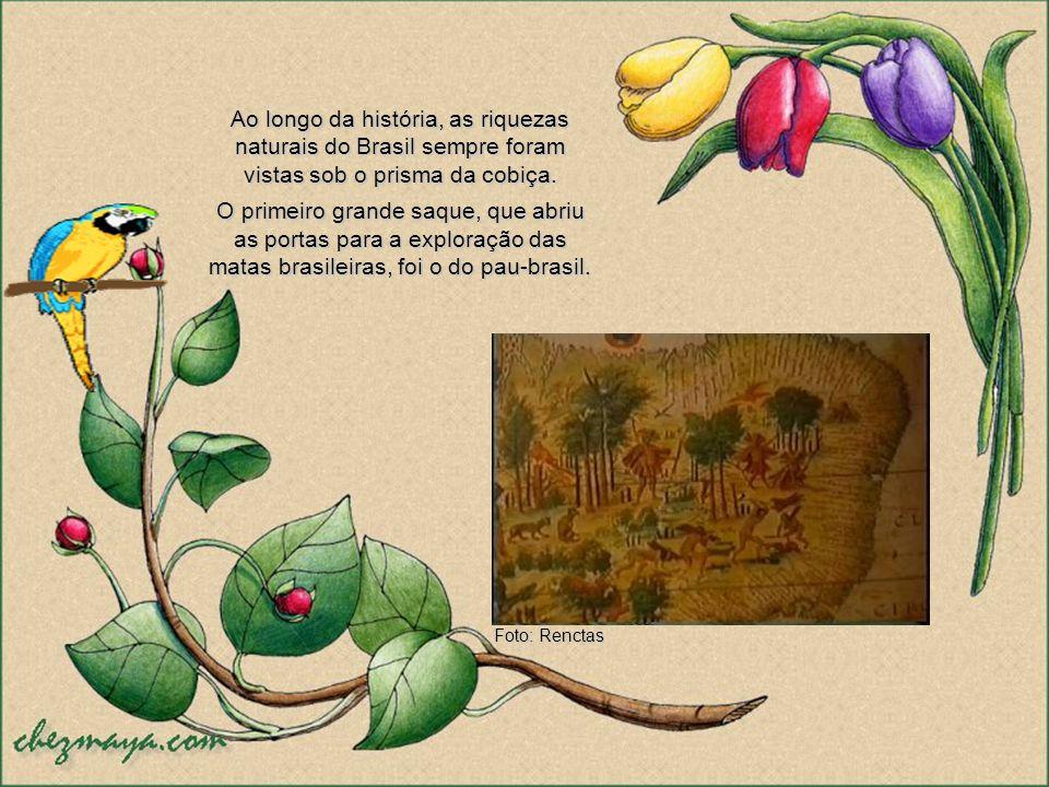 Ao longo da história, as riquezas naturais do Brasil sempre foram vistas sob o prisma da cobiça.