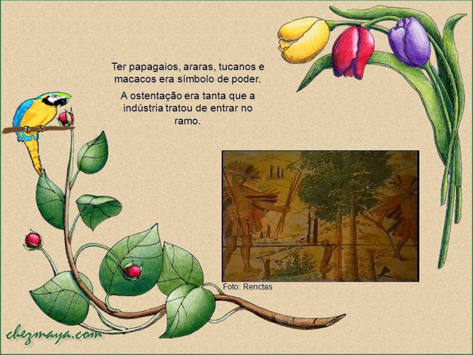 Ter papagaios, araras, tucanos e macacos era símbolo de poder.