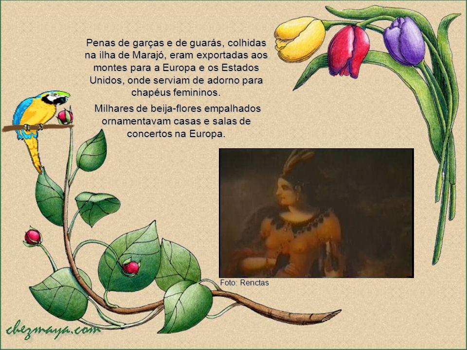 Penas de garças e de guarás, colhidas na ilha de Marajó, eram exportadas aos montes para a Europa e os Estados Unidos, onde serviam de adorno para chapéus femininos.