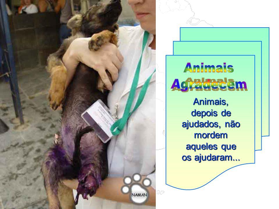 Animais, depois de ajudados, não mordem aqueles que os ajudaram...
