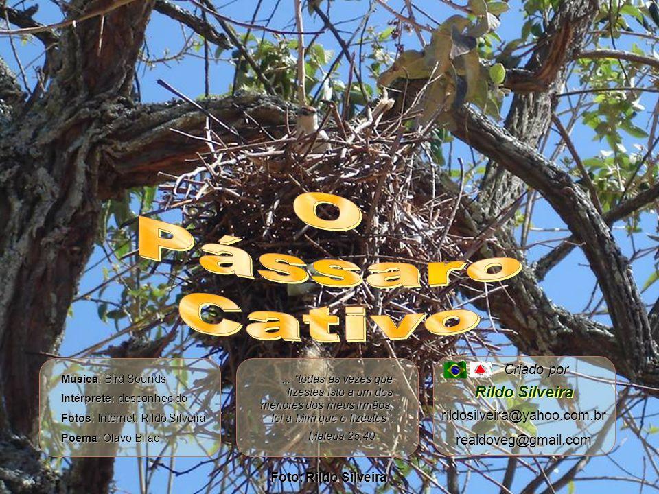 O Pássaro Cativo Rildo Silveira Criado por rildosilveira@yahoo.com.br