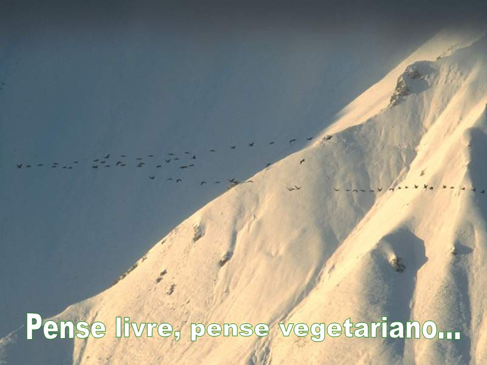 Pense livre, pense vegetariano...