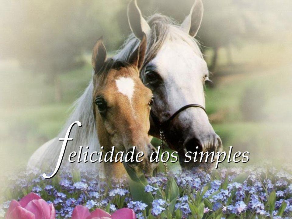 felicidade dos simples