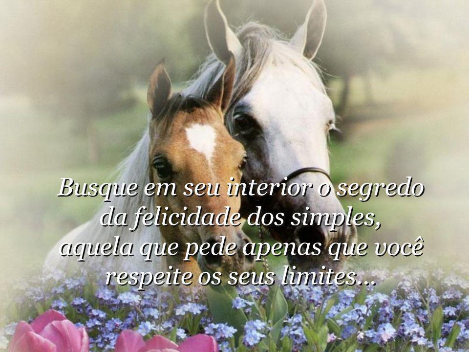 Busque em seu interior o segredo da felicidade dos simples, aquela que pede apenas que você respeite os seus limites...